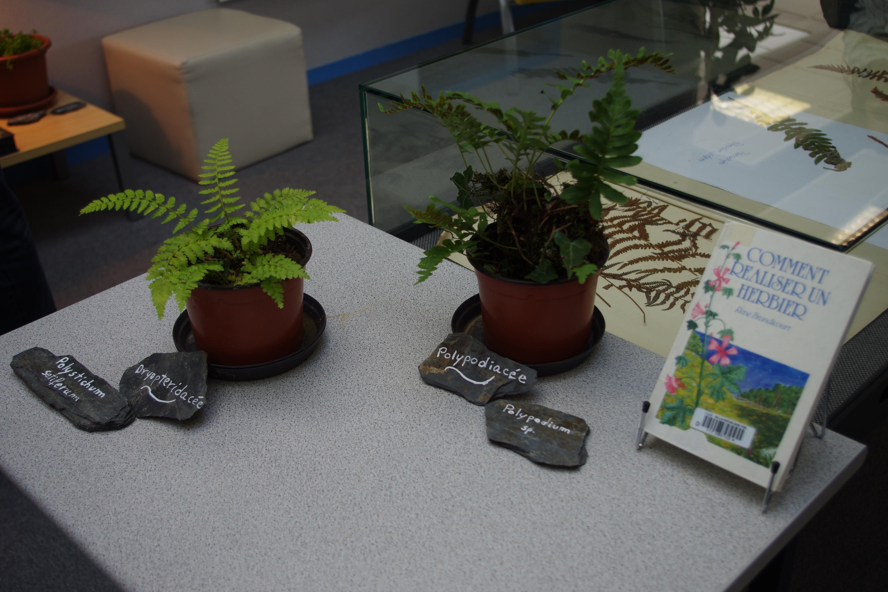 Exposition Herbiers